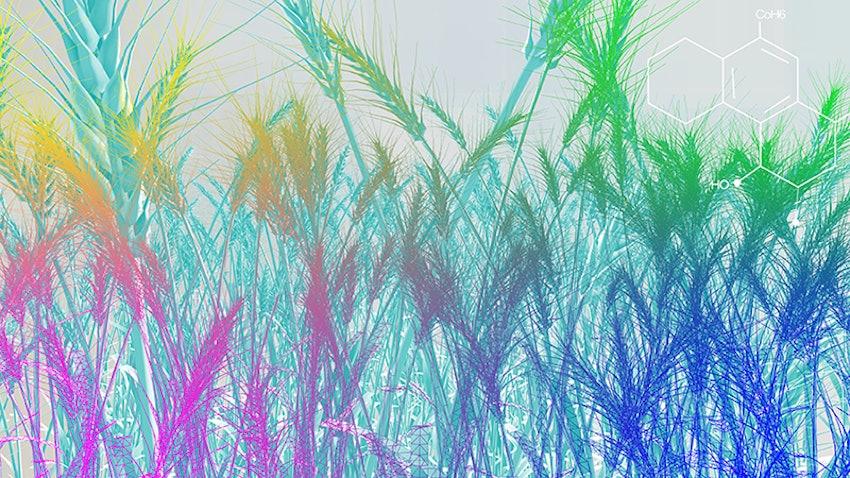 Bioenergy Grass Smaller For Web