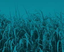 ETI seeks partners for bioenergy project to refine estimates of available UK land that could be used for energy crops